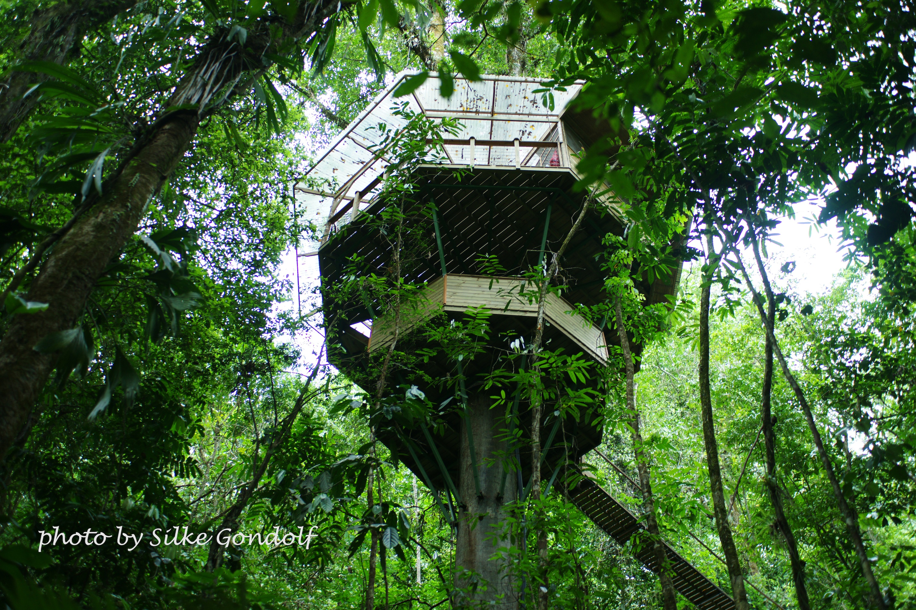 Costa rica 39 s finca bellavista treehouse community is 100 for Tree house costa rica