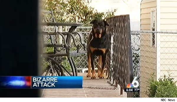 Naked intruder attacks dog in Florida home, police say.