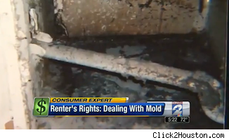 mold in apartment of Paul Bloom