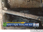Who's Responsible for Mold in Your Apartment? (VIDEO)