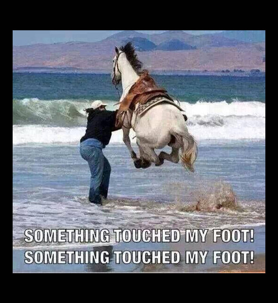 Dog Video Something Touched My Foot
