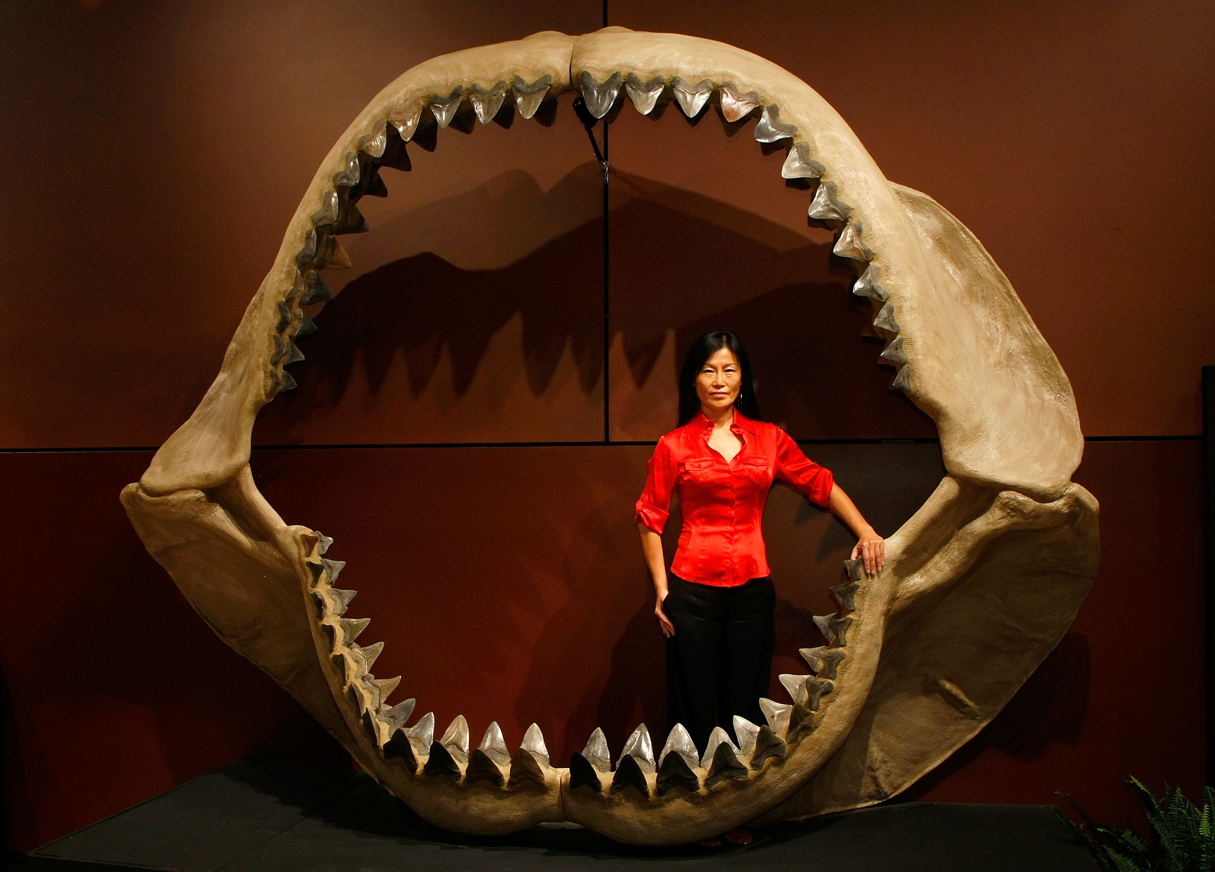 In Australia, What Predator Killed And Ate A 10-Foot Great White Shark? 'The Hunt For A Super ...