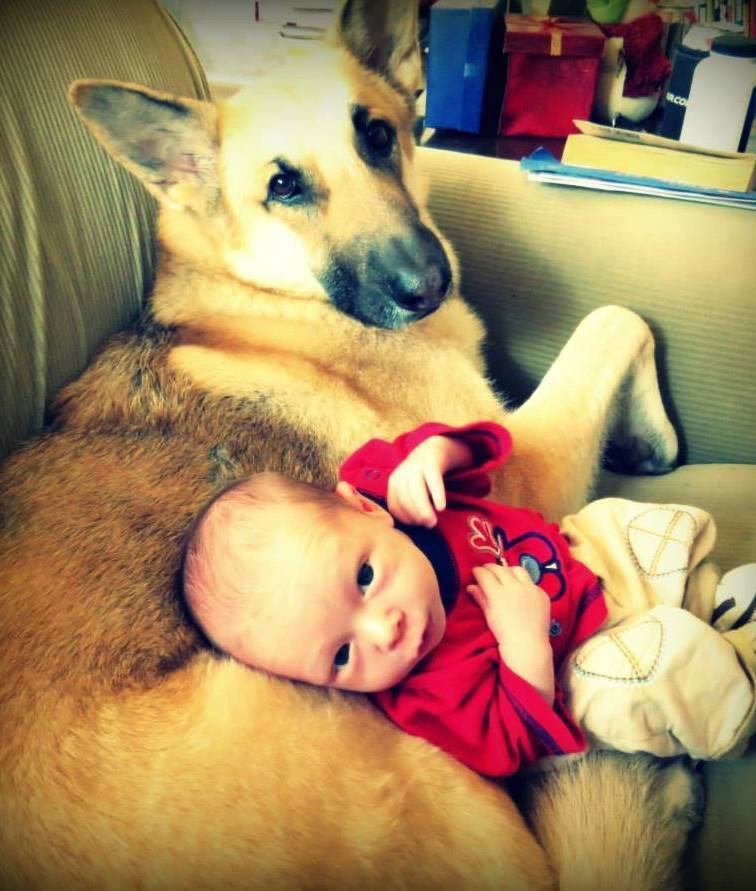 15 Dogs and Babies | PawNation