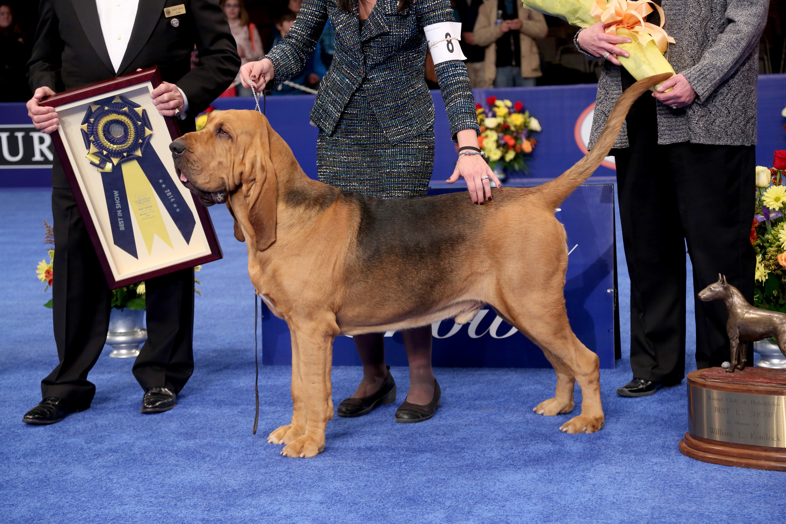 A Bloodhound Named Nathan Nathan the Bloodhound wins the