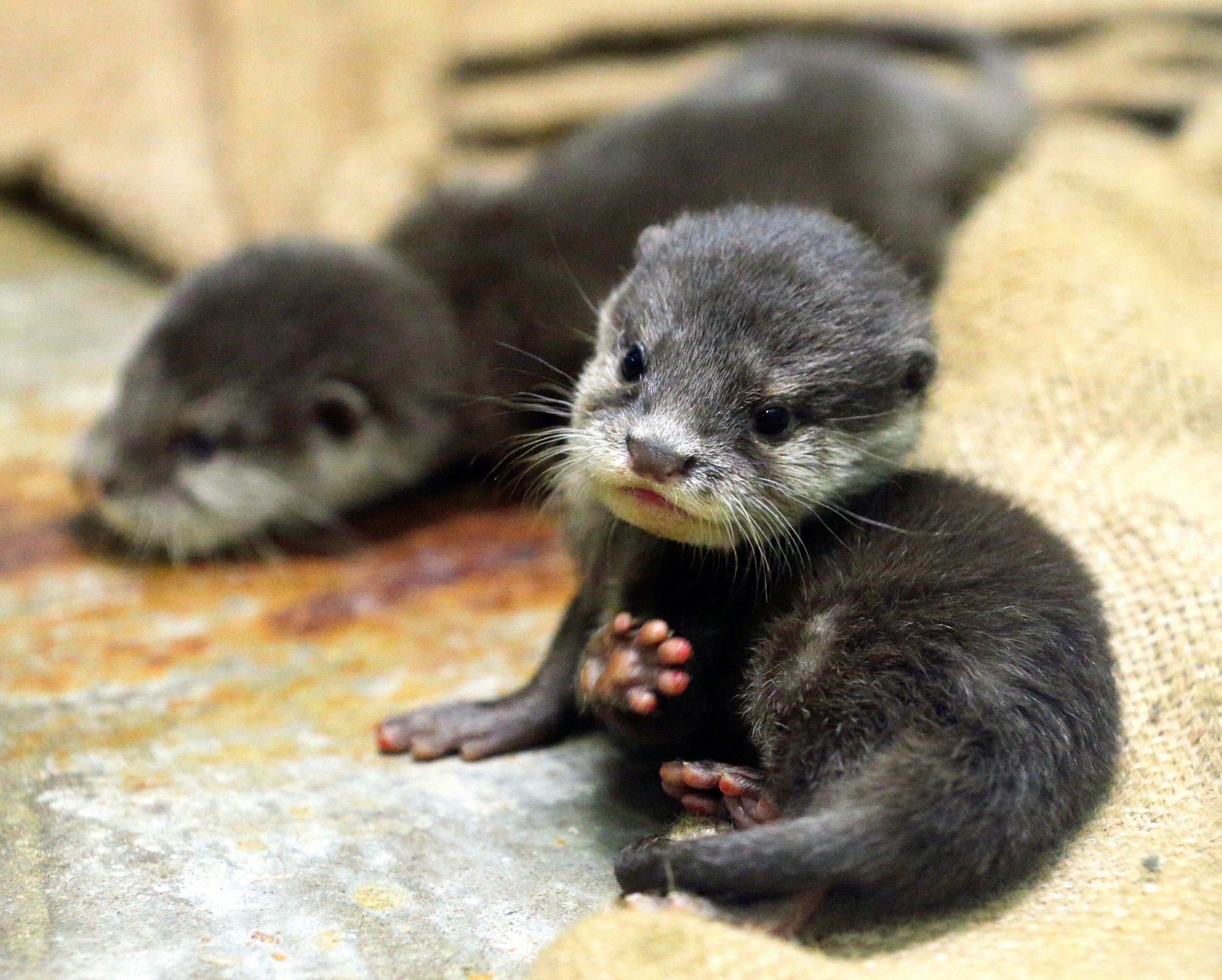 Very cute photos of otters - AOL Travel UK