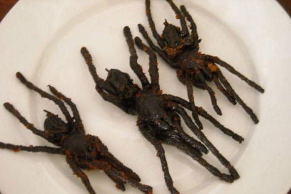 Fried tarantulas, Cambodia