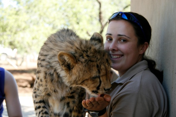 Work with cheetah in South Africa