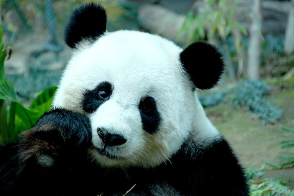Work with pandas in China