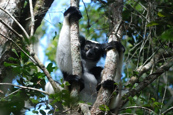 Lemurs, chameleons and more on a Madagascan safari