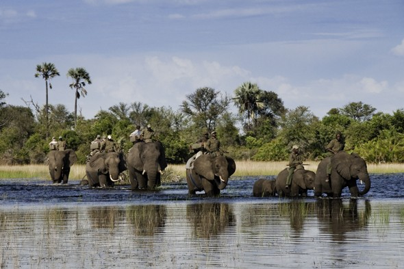 Explore Botswana on an elephant-back safari