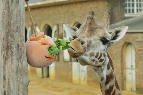 London Zoo's animals get into the Halloween spirit