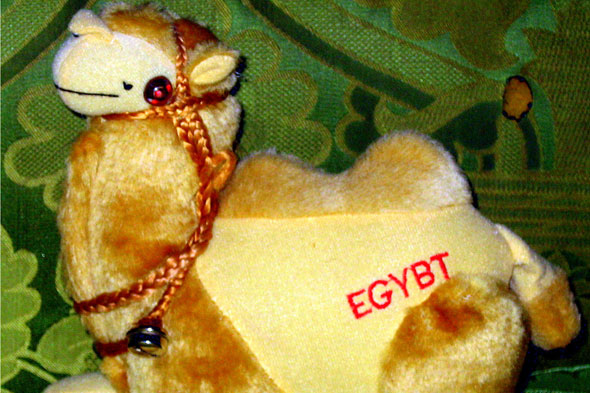 Camel, Egybt (or should that be Egypt?)