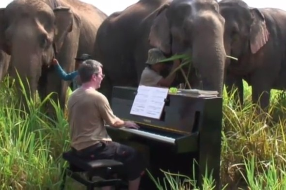 Video: British man drags piano up hill in Thailand to play for blind elephants