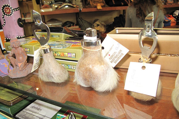 Kangaroo testicles, Australia