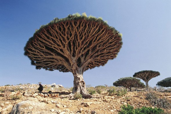 Socotra Island, Indian Ocean