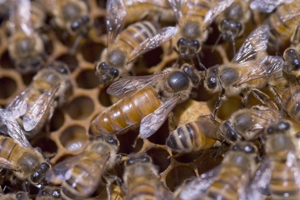 British tourist killed by bees on holiday in Africa