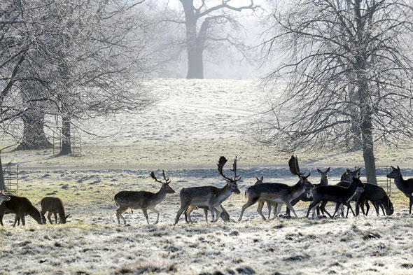 Deer park, Studley Royal, near Ripon