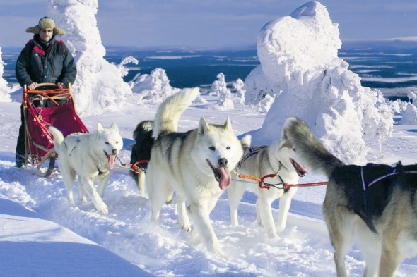 Go wild with husky sledding