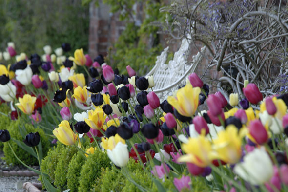 Tulip trumpets