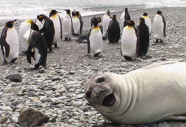 Cheeky seal has the last laugh (arf-arf)