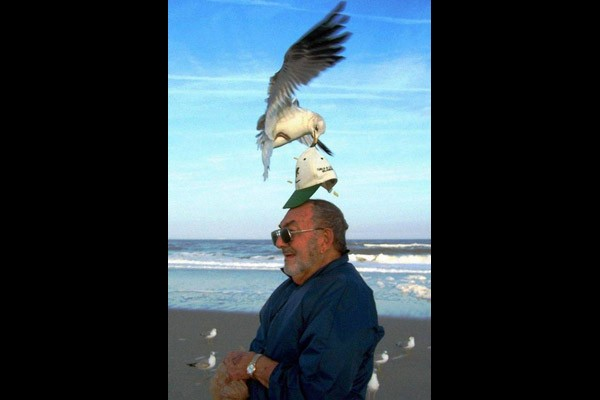 Hats off to the seagull