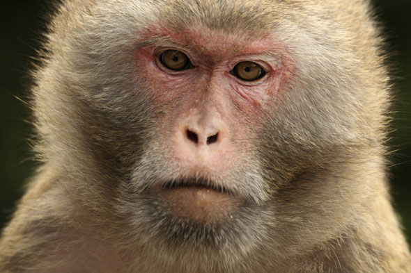 Strap a drugged rhesus monkey to your belly