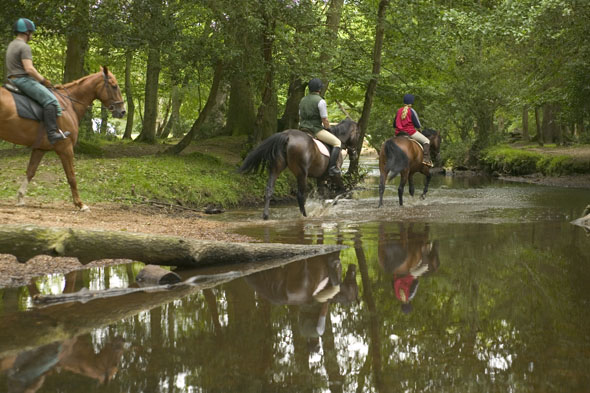Ride a horse through the New Forest