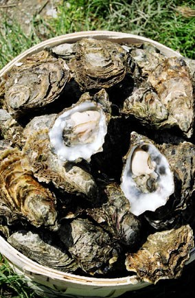 Colchester oysters - Colchester, Essex