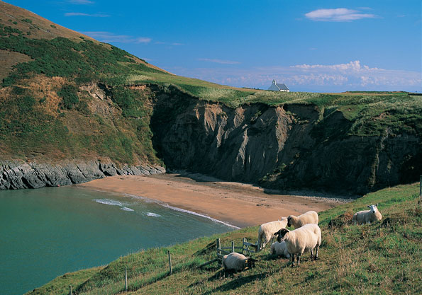 Best for wildlife lovers: Mwnt, Mid-Wales