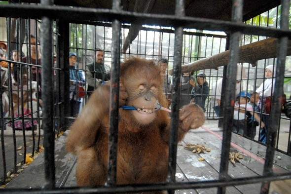 Singer Morrisey calls for closure of 'horror' Indonesian zoo