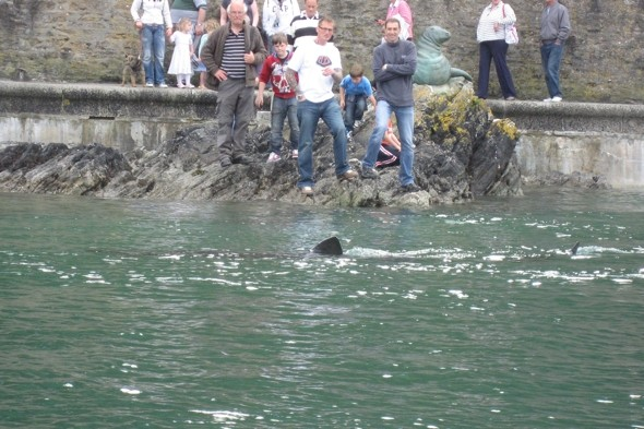 Huge shark spotted in Cornwall harbour