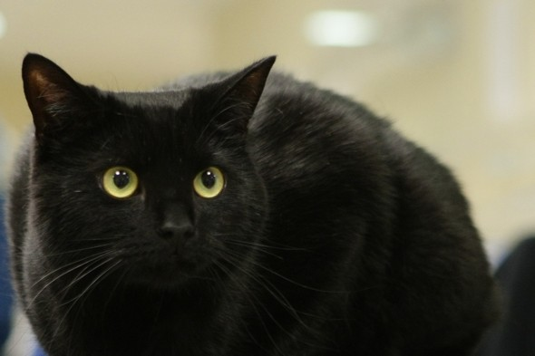 Black cat survives 120-mile journey on underside of train