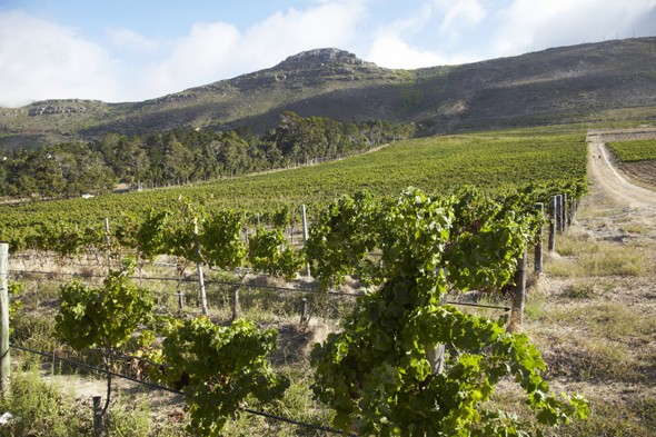 Sample the up and coming vineyards of South Africa