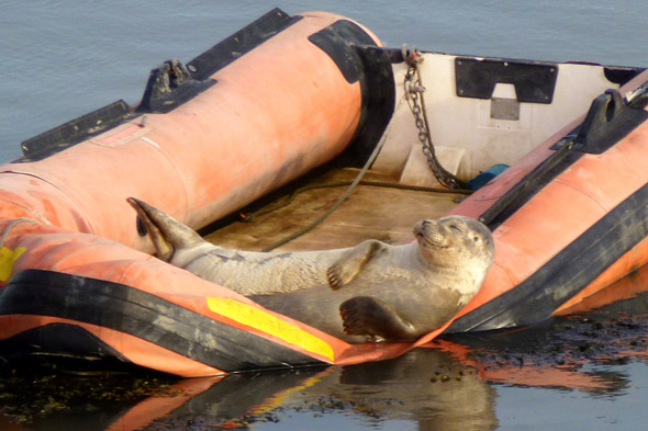 And relax! Seal with a smile finds perfect spot to sunbathe