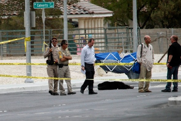 Escaped chimpanzees rampage through Las Vegas