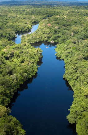 Amazon Rainforest, South America