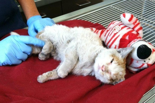 Kitten survives 6,500-mile journey across the Pacific