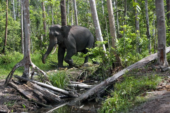 The Tropical Rainforest Heritage of Sumatra, Indonesia