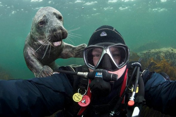 Meet the smiling photo-bombing seal