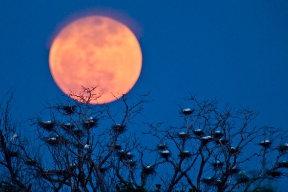 Moon Images Tonight For The Blue Moon Tonight
