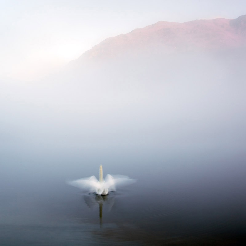 Dawn Display on Rydal Water, Cumbria (Commended)