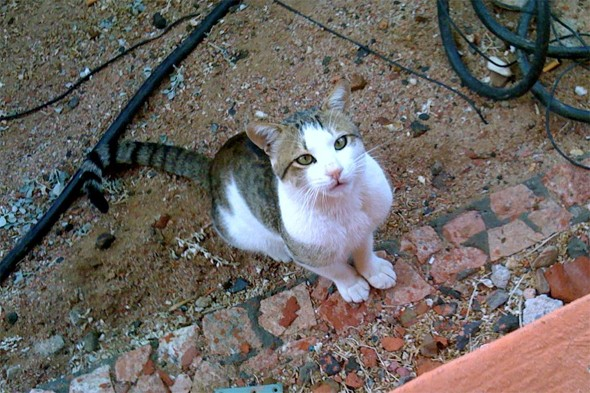 Holidaymakers spend £6k rescuing cat from Egypt - then it runs away
