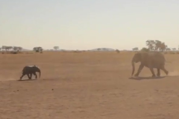 Amazing video captures rescue of baby elephant stuck in a well