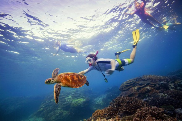 Swim, snorkel and dive Australia's Great Barrier Reef