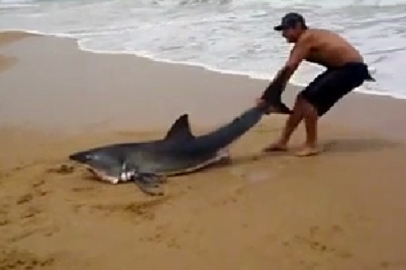 Man Saves Beached Great White Shark