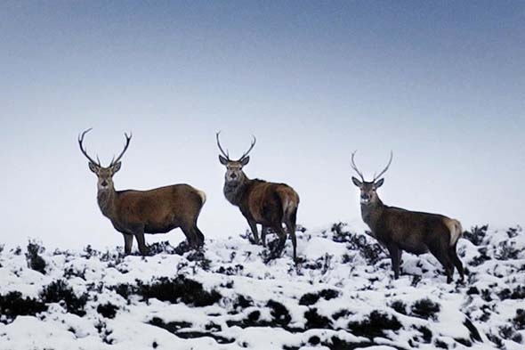 3. Scottish Borders: Red deer