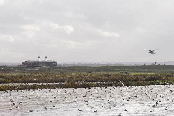 6. Rainham Marshes, Essex: Post-industrial wildlife sanctuary