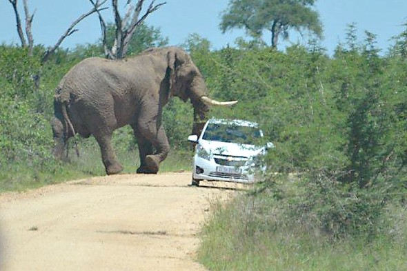 Elephant flips car of British tourists on safari in Kruger National Park