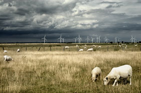 9. Kent coast: Lunar landscape with its own breed of sheep