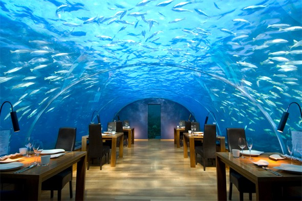 Explore the underwater world of the Maldives